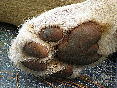 Paws for Thought by Frances Hodgkins