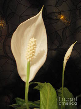 Peace  Lily by Ann Fellows