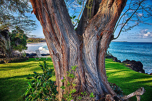 Omaste Witkowski - Peace Tree