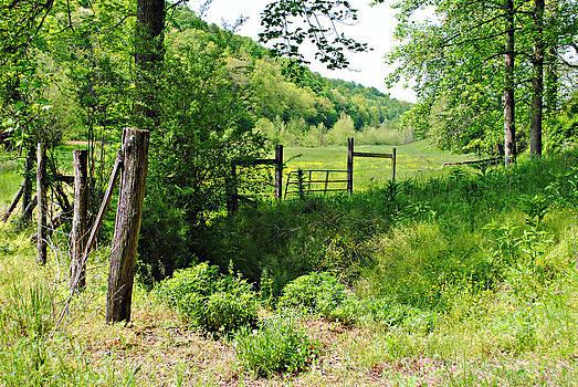 Peaceful Field by Stephanie Grooms
