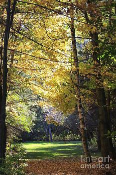 Peaceful Path by Kathy DesJardins