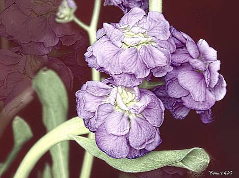 Peaceful Purple by Bonnie Willis