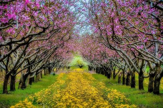Peach Blossoms Dandelion Carpet by Henry Kowalski