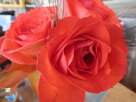 Peach Roses by Karen Mary Castranova