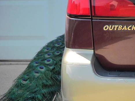 Peacock Tail by Pamela Morrow