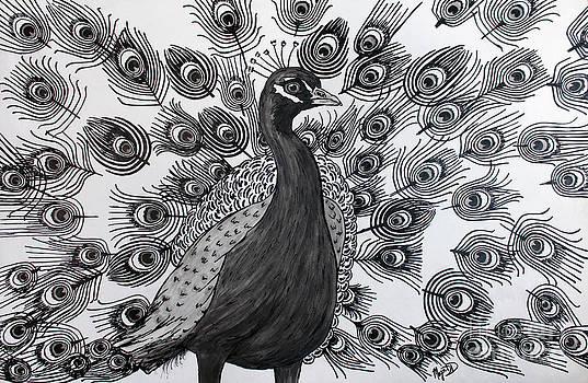 Peacock Walk by Megan Dirsa-DuBois