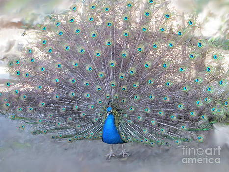 Peacock3  by Laurianna Taylor