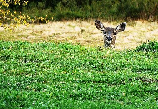 Tia Marie McDermid - Peek A Boo Deer