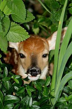 Peeking by Diane Merkle