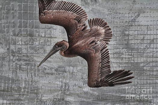 Deborah Benoit - Pelican Dive Mode
