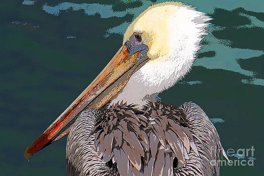 Pelican Portrait by Bob and Jan Shriner