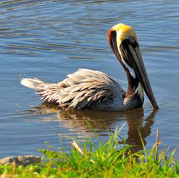 Pelican Pride by Rachel E Moniz