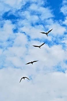 Pelican Sky by Lisa Merman Bender