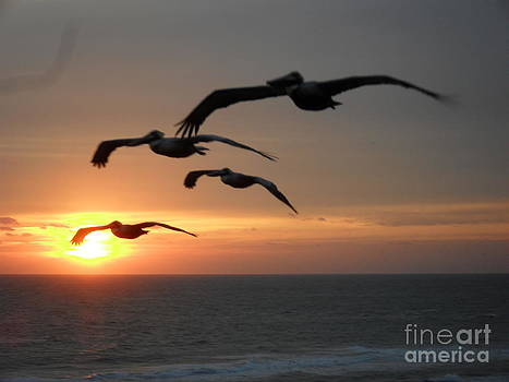 Laurie D Lundquist - Pelican Sun up