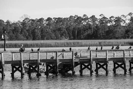 Pelicans and Sea Gulls sharing the rail by Gordon H Rohrbaugh Jr