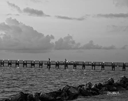 Pelicans at Sunrise by IB Ehrlich