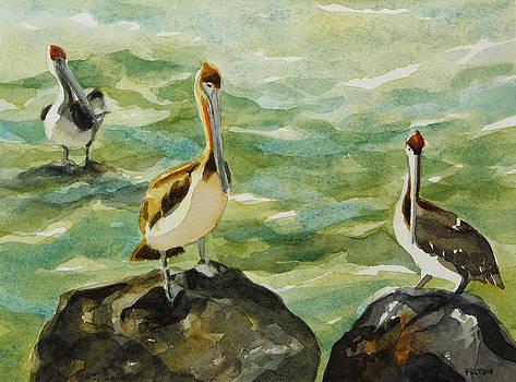 Pelicans by Julianne Felton 9-30-13 by Julianne Felton