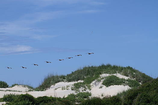 Pelicans in a Row 5 by Cathy Lindsey