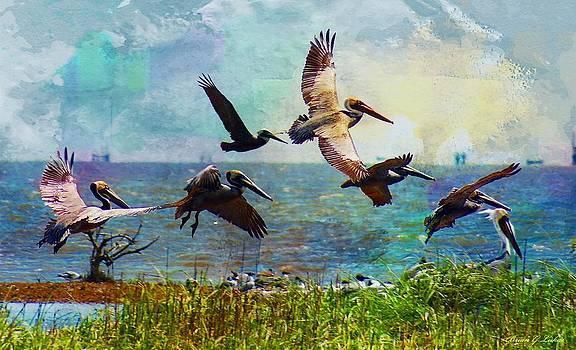 Pelicans In Flight - GUlf Islands by Brian Lukas