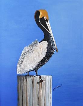 Pelicans Lookout by June Holwell