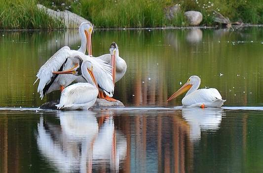 Pelican's by Patricia Feind