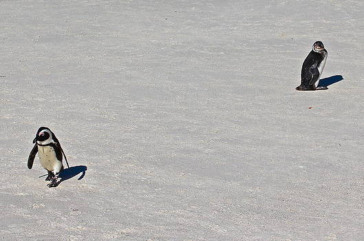 Penguin Disagreement by Ed Pettitt