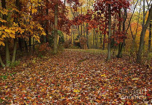 Pennsylvania Colorful Fall by Tabatha Knox