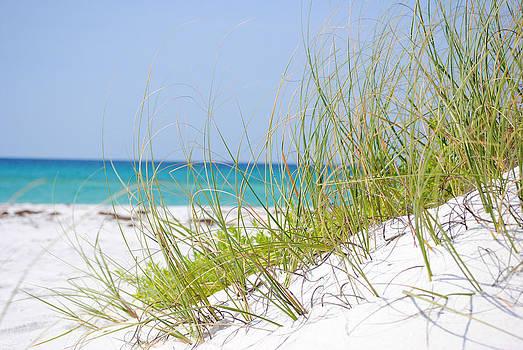 Pensacola Beach Sea Oats by Ken Rutledge