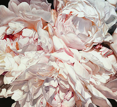 Peonies Carre 130 x 120cm by Thomas Darnell