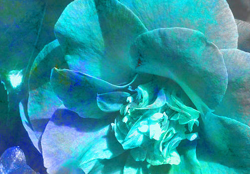 Peony Blue by Louise Grant