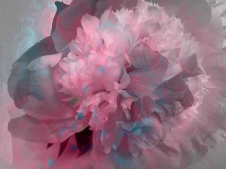 Peony - Pinks and Blues by Louise Grant