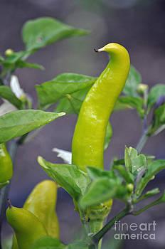 Gwyn Newcombe - Pepper Personality