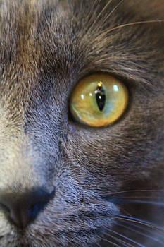 Pepper's Eye by Alicia Knust