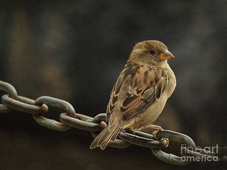 Perched by Margaret Guest