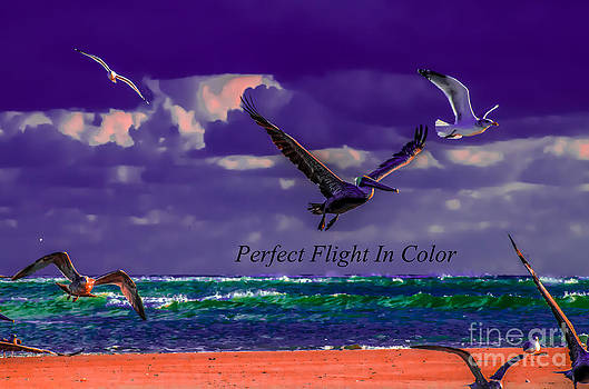 Pelican Perfect Flight In Color by Crissy Anderson