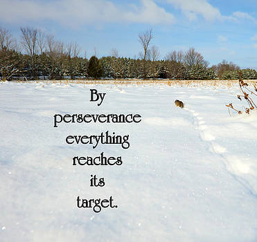 Perseverance. by Kelly Nelson