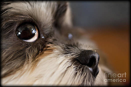 Pet Advertising Image  by Cris Hayes