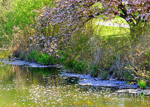 Petals in the Water by Pamela Rivera