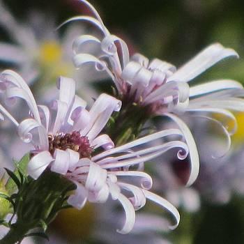 Petals like Ribbons by Christine Bradley