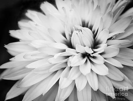 Petals by Nancy Dempsey
