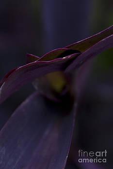 Petals Up Close by Steve Triplett