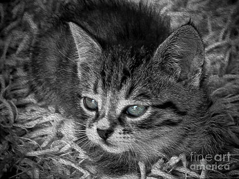 Petite Tabby  by Karen Lewis