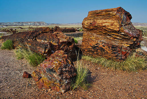 Petrified Forest by David Hintz