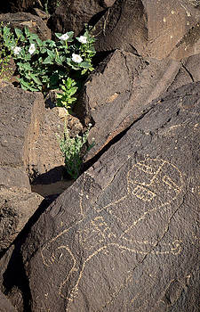 Mary Lee Dereske - Petroglyph and Sacred Datura - Petroglyph National Monument