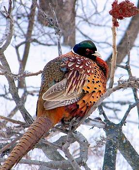 Pheasant Puff by Tanya Arends
