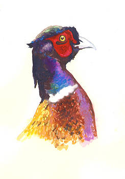 Pheasant Watercolor by Alison Fennell