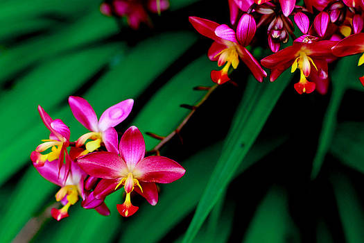 Philippine Ground Orchid by Donald Chen