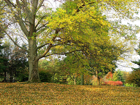 Philips Healthcare Grounds - Fall by Paul Thomas