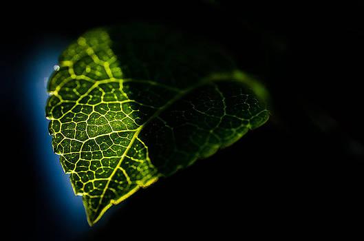 Photosynthesis Neighborhoods by Brian Xavier