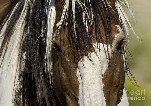 Picasso's Eyes by Carol Walker